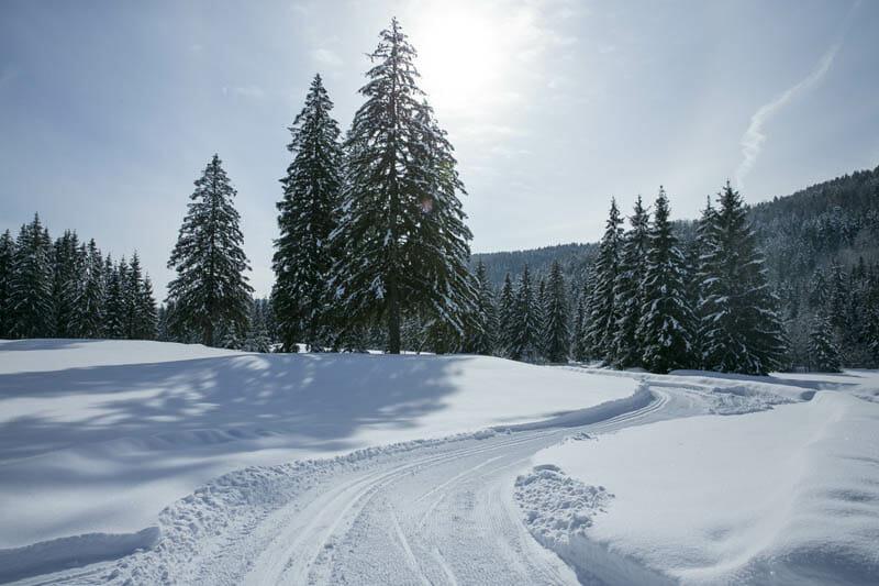 Bežecké lyžovanie na Táloch