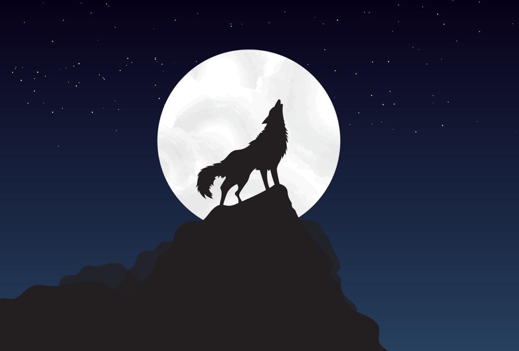 Vlk na skale