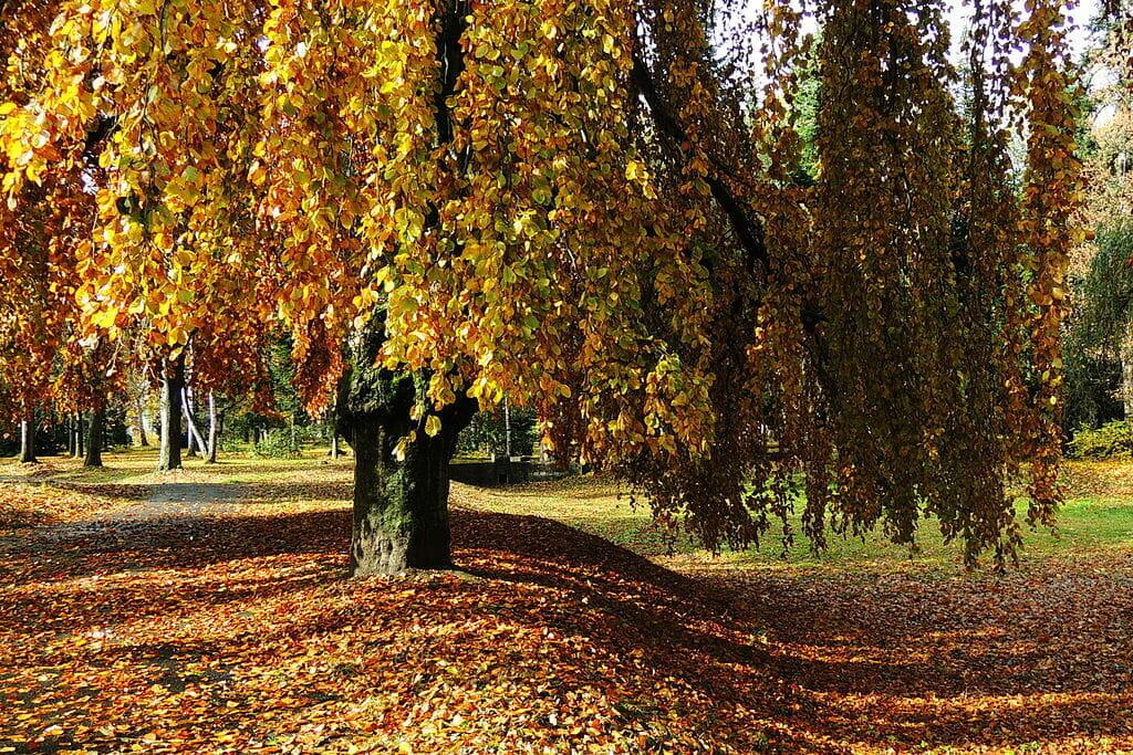 Na jeseň