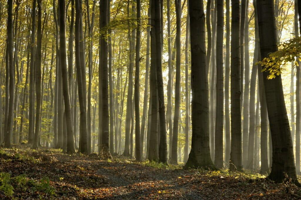 Les v Malých Karpatoch