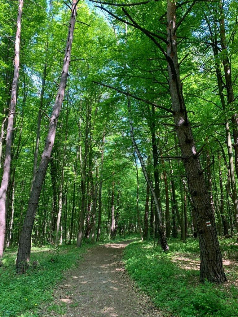 Chodník Lesoparkom Dukla