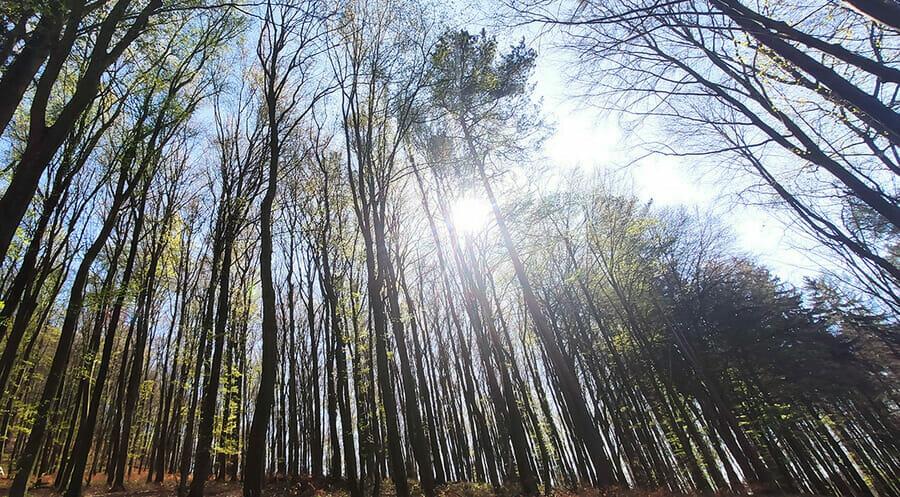 Lesy Trenčianskych Teplíc
